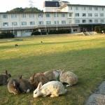 広島県にある大久野島、通称うさぎ島の宿泊や車でのアクセスは?