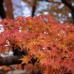 秋の京都観光おすすめ!紅葉と自然に癒される保津川下りと嵐山