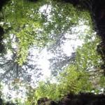 屋久島観光一度で満喫!縄文杉と白谷雲水峡を含むおすすめプラン