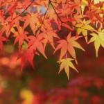 秋はやっぱり紅葉狩り!東海地方の紅葉狩りおすすめスポット