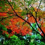 京都・紅葉絶景スポット!芸術的なオススメ景観・大原編