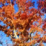 京都の絶景紅葉スポット!知らぬと損するマル秘 秋の特別公開情報