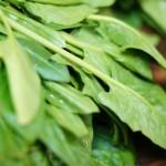 冬のほうれん草は栄養満点!!ほうれん草の主な効果を紹介