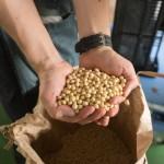 大豆が持っている美容と健康効果!大豆イソフラボンがすごい!