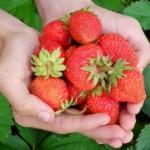 イチゴの驚くべき美容効果とは?栄養豊富で効果抜群の真相とは!